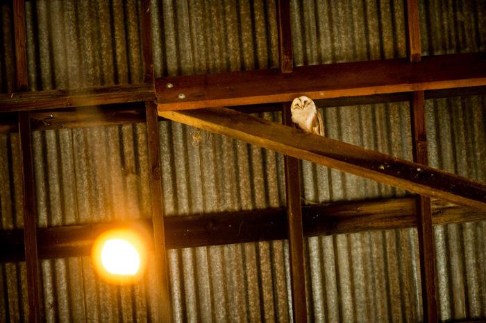 central coast barn owl wedding photography